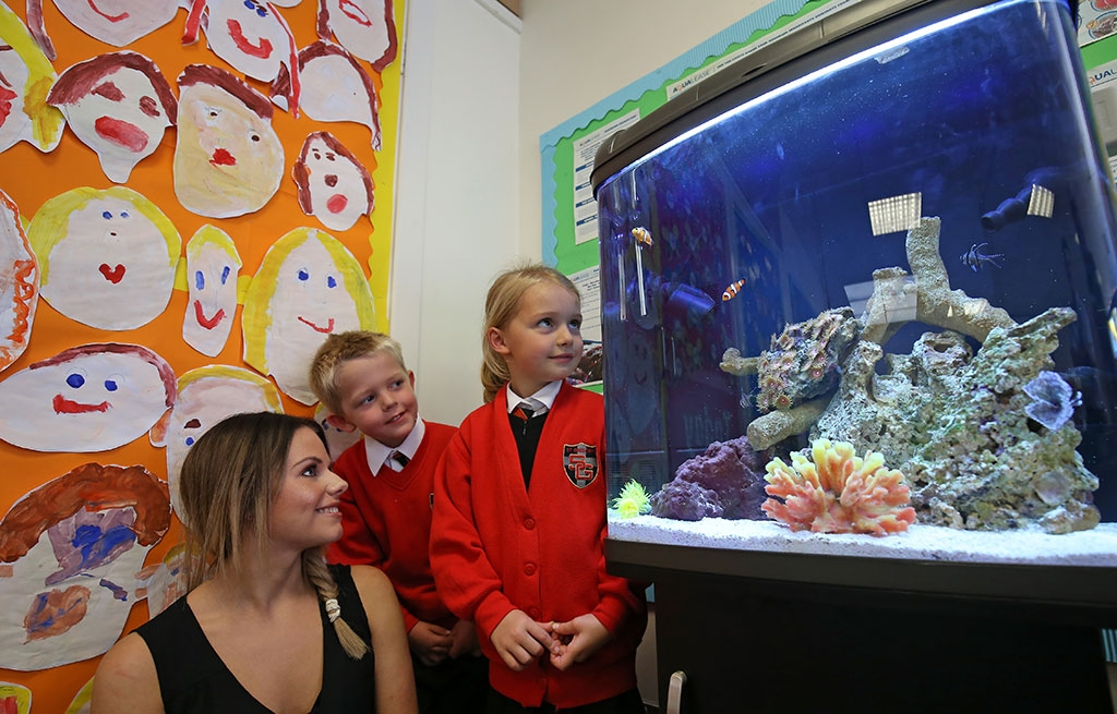 Educational Classroom Project Aquarium - St.Gregorys RC Primary - Chorley-2