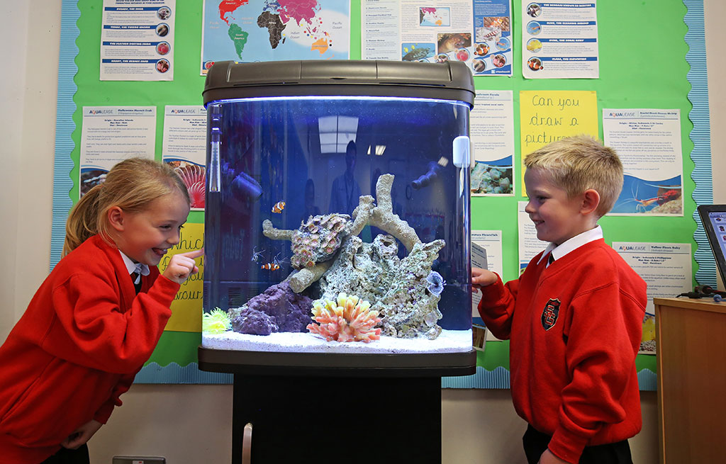 Educational Classroom Project Aquarium - St.Gregorys RC Primary - Chorley