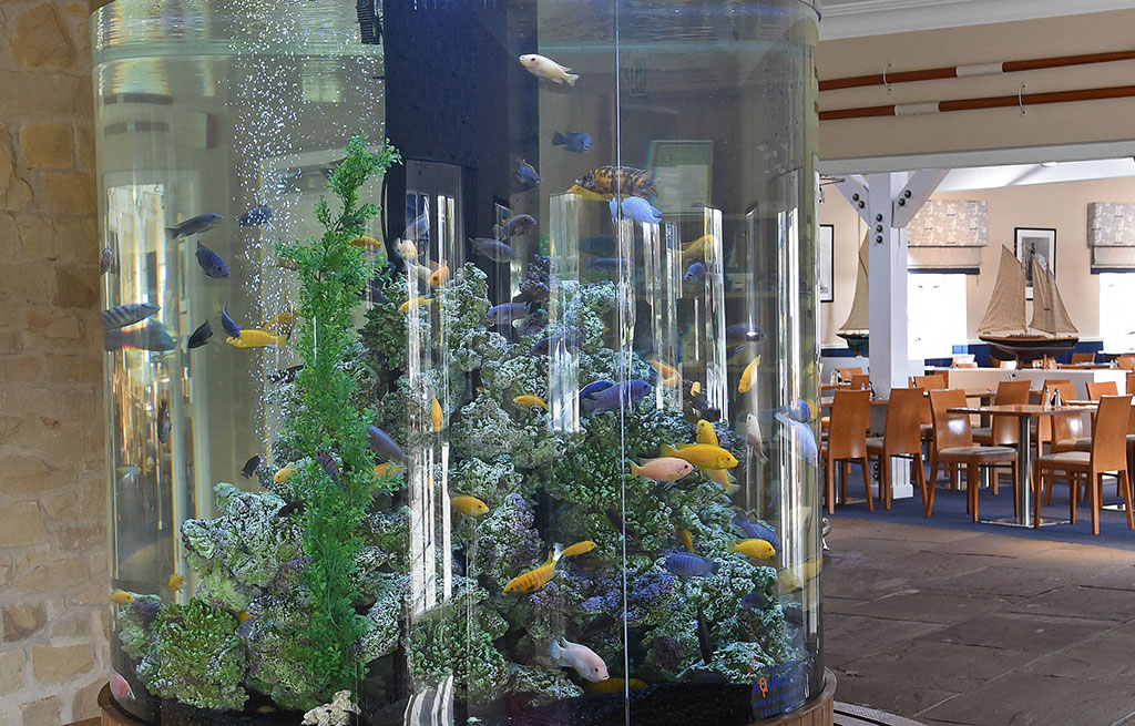 Custom Built Aquarium | Banny's Fish & Chip Restaurant