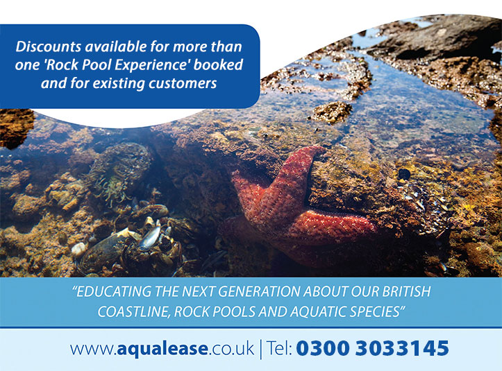 rock-pool-experience-bottom-graphic-4