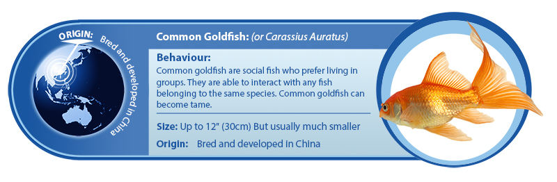 What S Included Cold Water Fish Aqualease