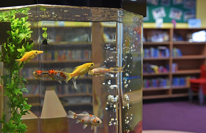 column-aquarium-blog-4