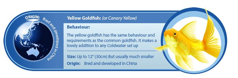 yellow-goldfish