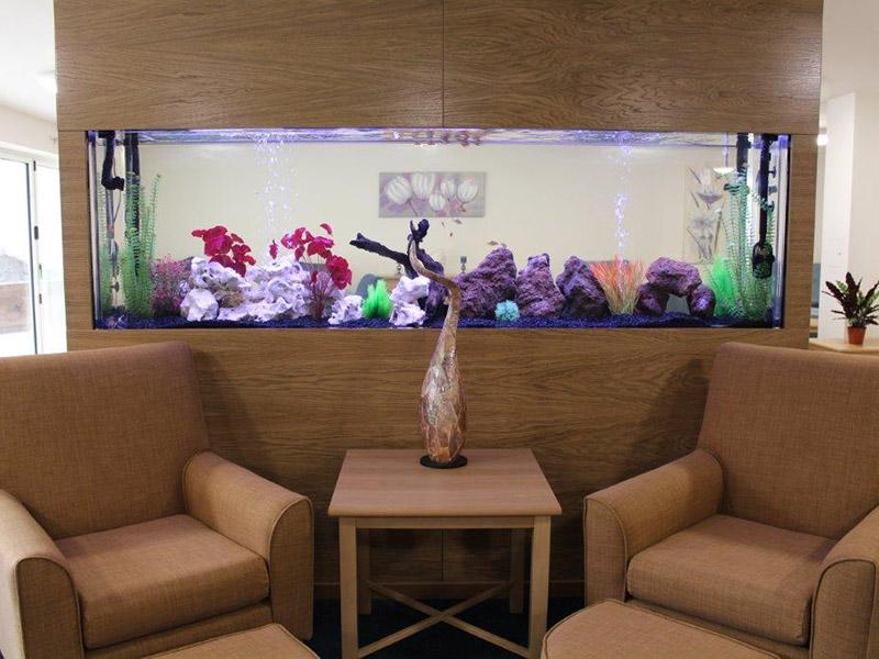 Olea Fernlea Bespoke Aquarium