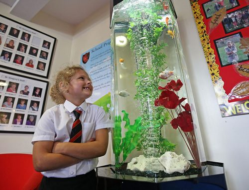 St Gregorys Catholic Primary School – Slimline Column with Coldwater fish
