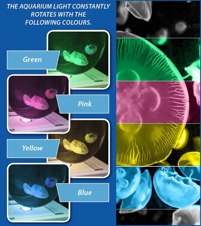 Jellyfish Tanks