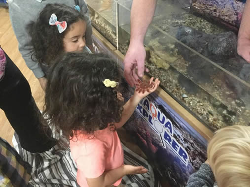 Museum Learning in Schools