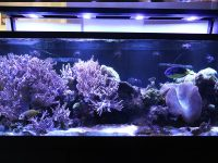 Business Aquariums