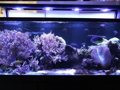 Business Aquariums