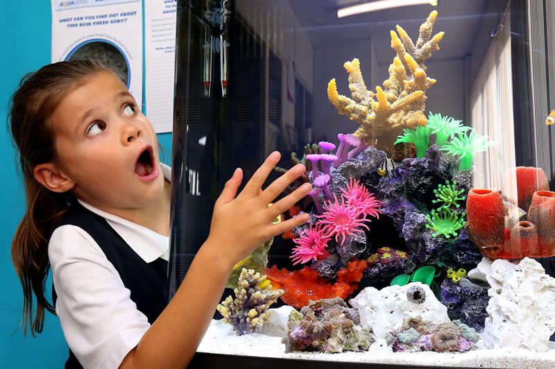 Happy Habitats Marine Reef Project