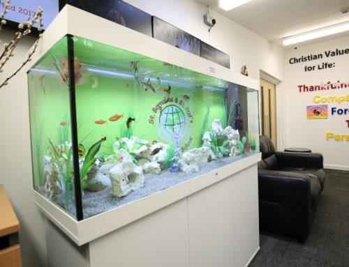 School Cabinet Aquarium
