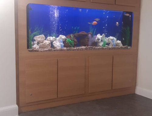 Custom Aquarium – Doves Nest Care Home – Olea Care Group