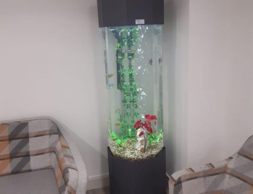 Tropical Column Aquarium – Business Reception Area