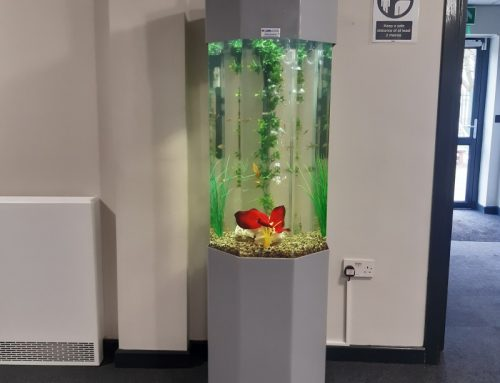 Column Aquariums at Alt Bridge Special School