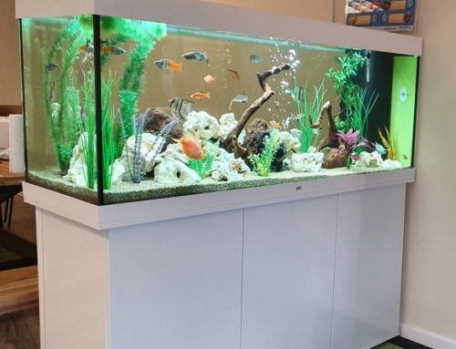 Rio 450 Cabinet Aquarium – The Audiology Practice