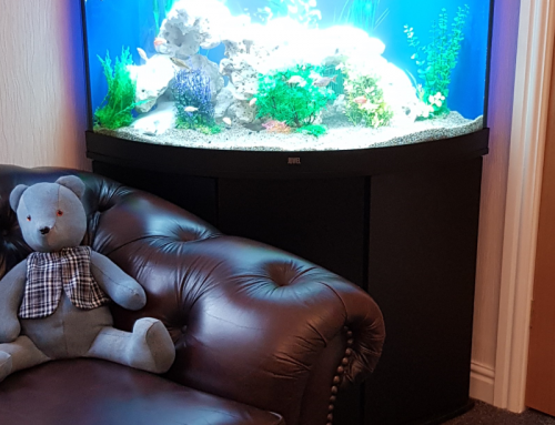 Funeral Directors Aquarium