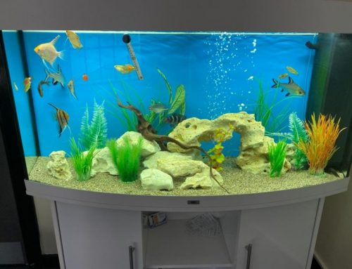 Vision 260 with Tropical Fish – Chess ICT Offices