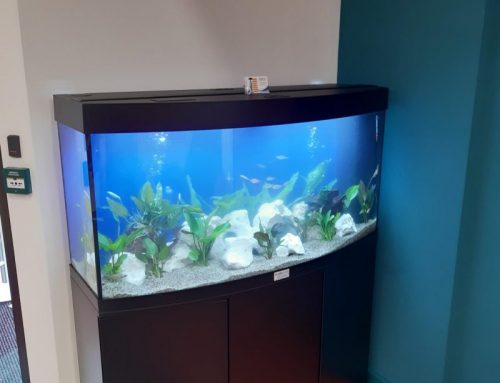 Vision 260 with Tropical Fish & Live Plants – Ascentis