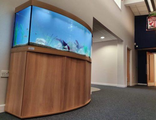 Vision 450 Cabinet Aquarium with Malawi Fish