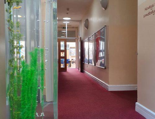 6ft Column Aquarium – Spring Hill Community Primary School