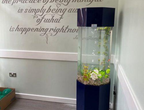 Secure Mental Health Service – Column Aquarium